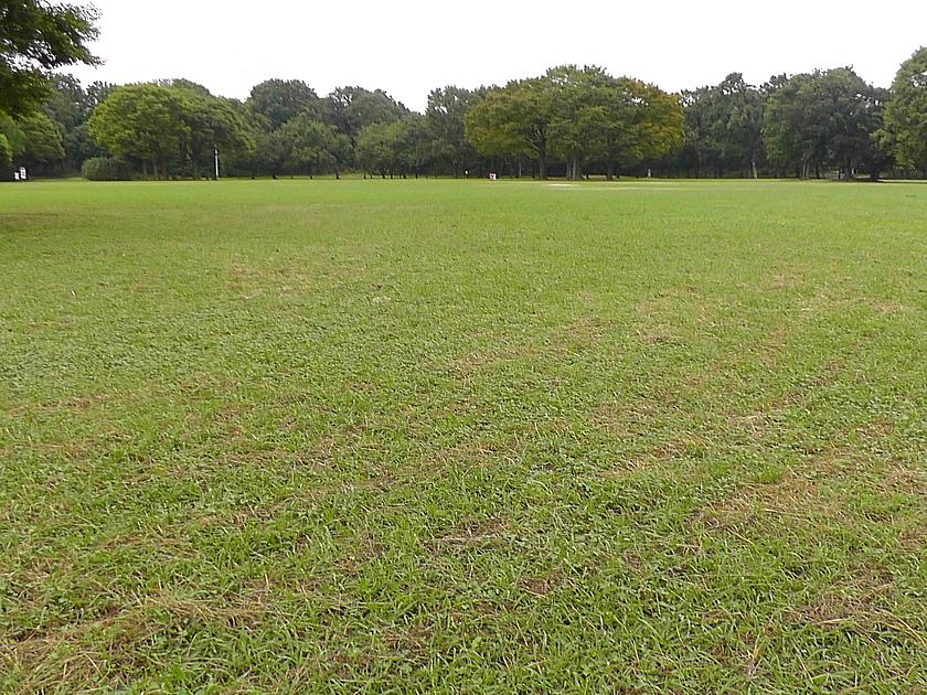 大泉緑地の大芝生広場の写真