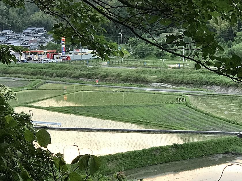 京都精華町の田んぼの写真