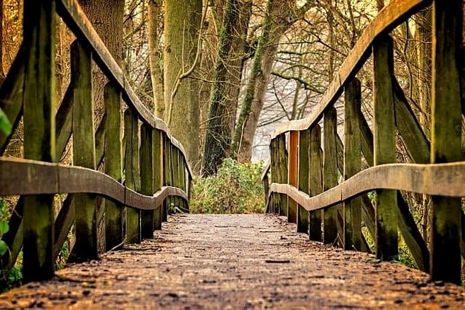 木の橋の画像
