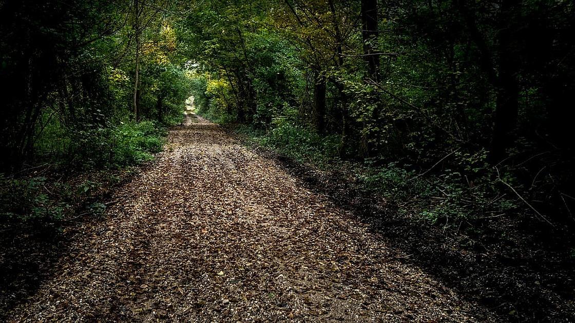 林の中の小道の画像