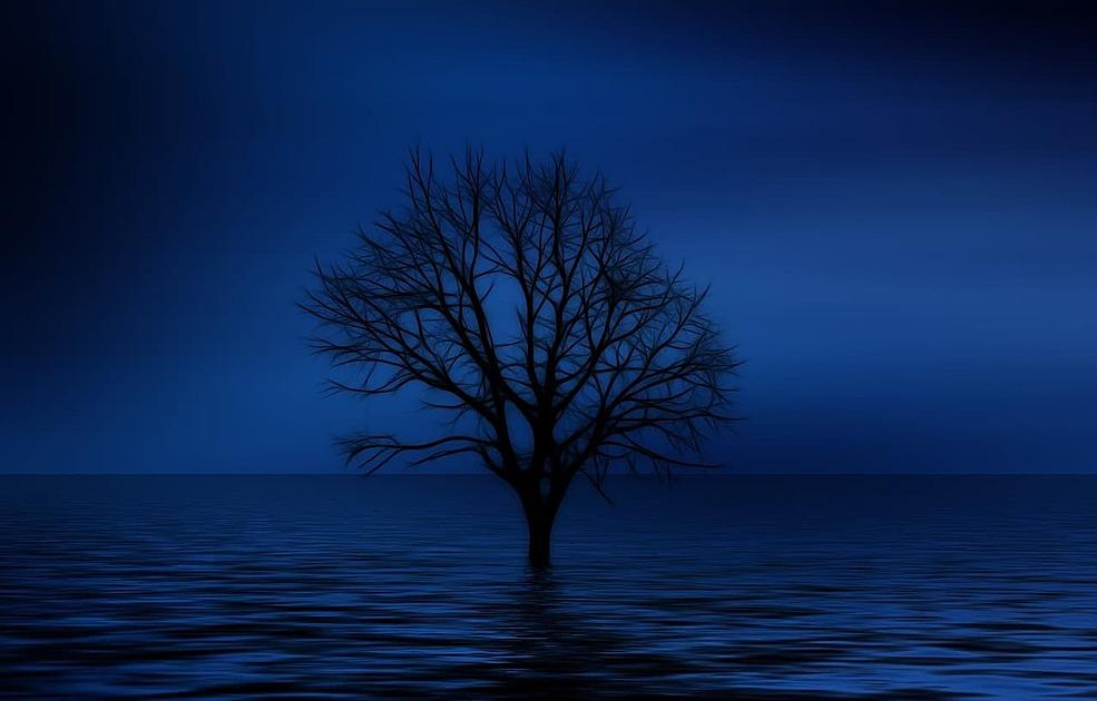 闇の中の木の画像