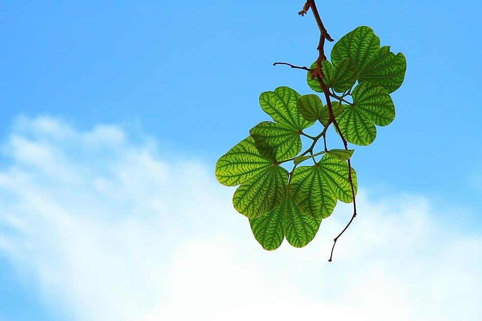 青空と葉っぱの画像