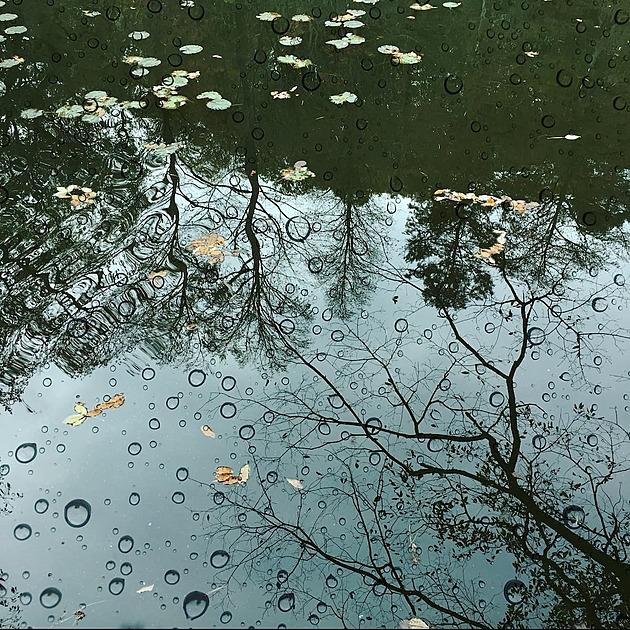 雨の水たまりの写真