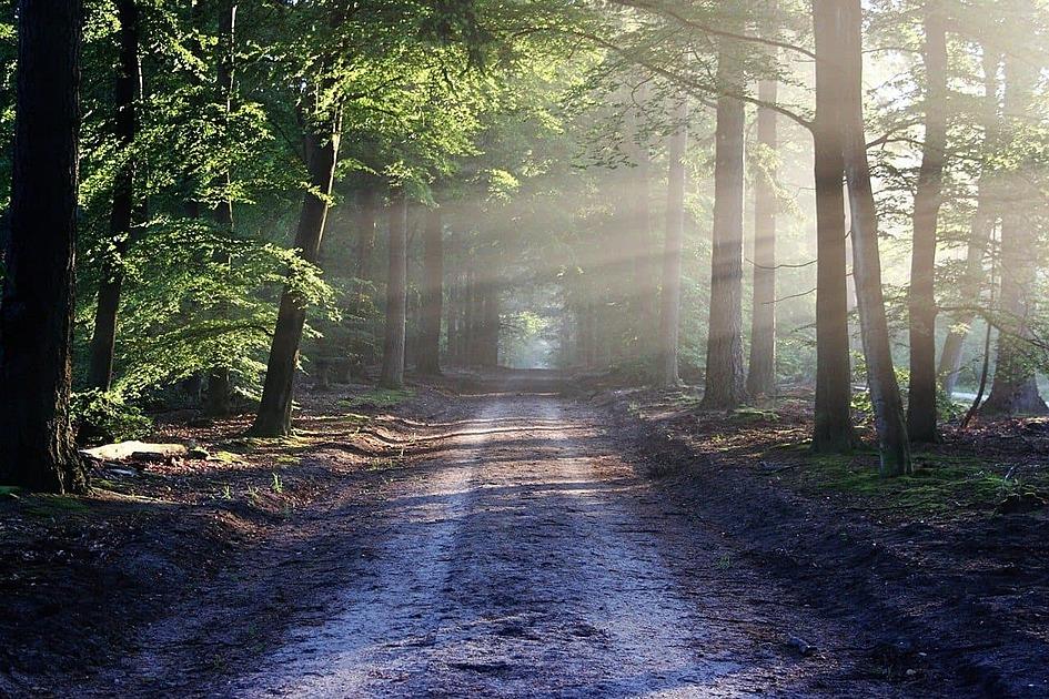 光がさす森の小道の写真