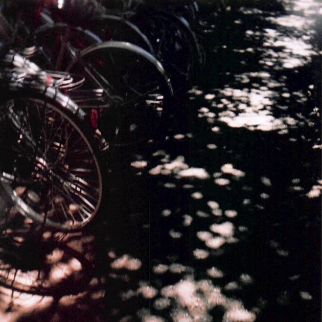 木漏れ日と並んだ自転車