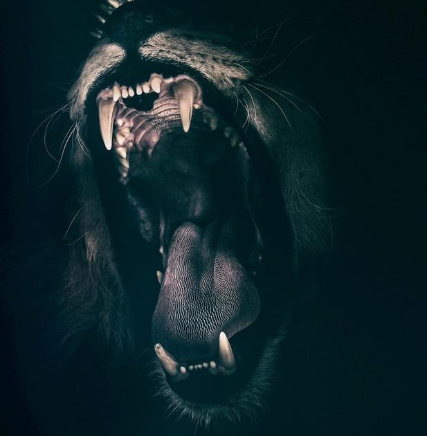 黒いライオンが吠えている