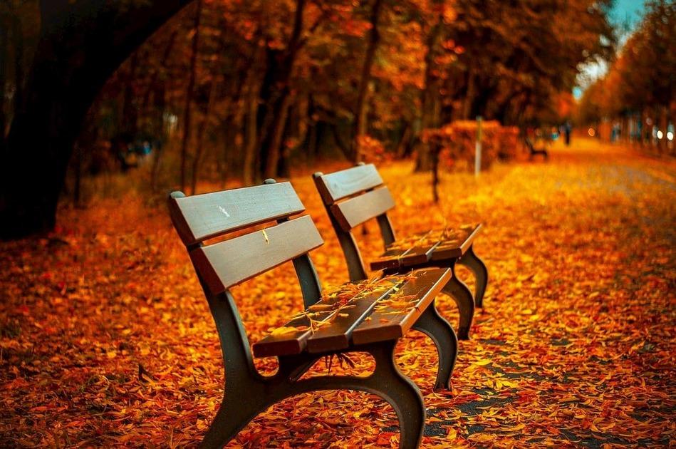 落ち葉が乗っているベンチ